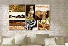 Collage foto soggiorno_esempio animali selvaggi