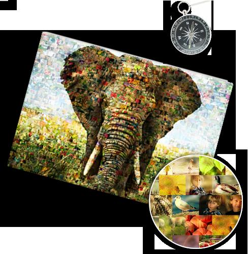 Mosaico foto_esempio elefante e dettaglio