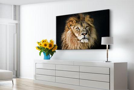 Soggiorno alluminio dibond_esempio primo piano leone