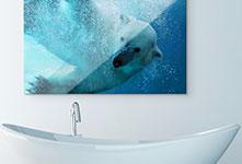 bagno plexiglass_esempio orso polare