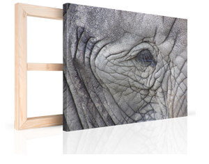 foto su tela per natale 4_esempio occhio elefante